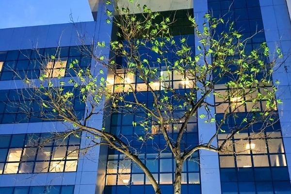 A famosa árvore de periquitos de Cuiabá