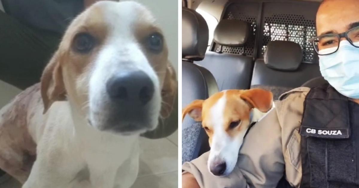 cão com homem em carro