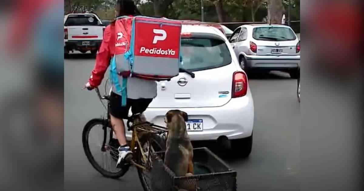 Entregador leva seu cãozinho nas entregas para não deixá-lo sozinho em casa