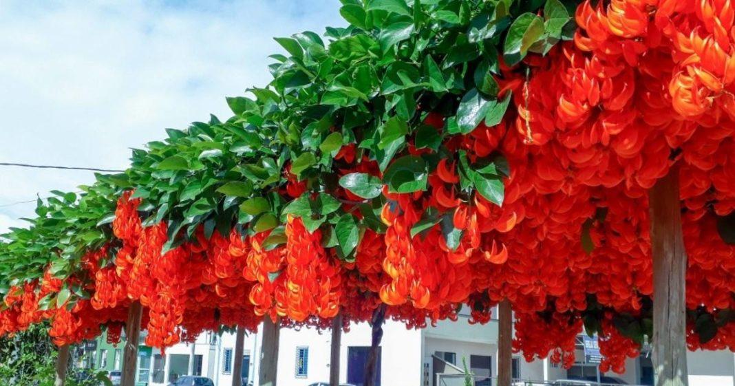 flores em rua de SC