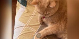gato olha moeda na pata