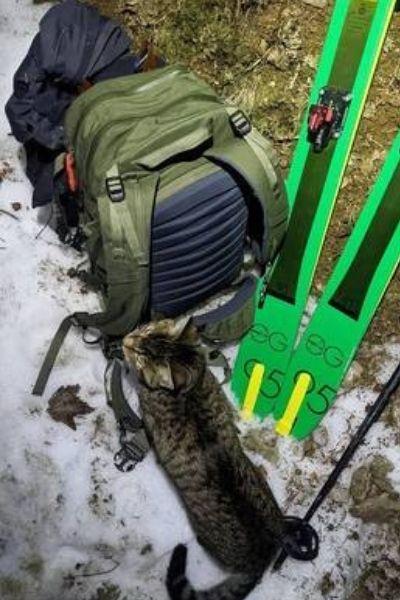 Gatinho perdido em montanha se junta com dupla de esquiadores em caminhada de 3.000m
