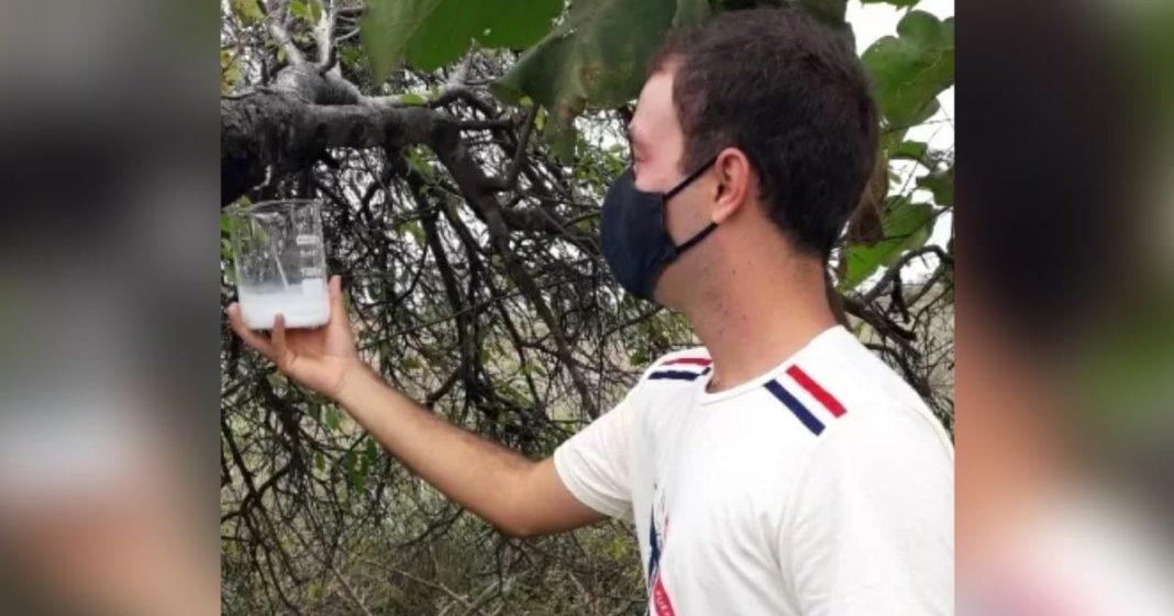 rapaz de máscaras segura copo próximo árvore