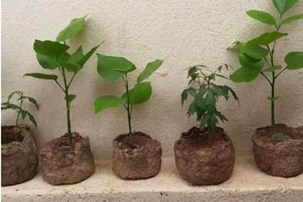 Vasos criados com resíduos de amendoim
