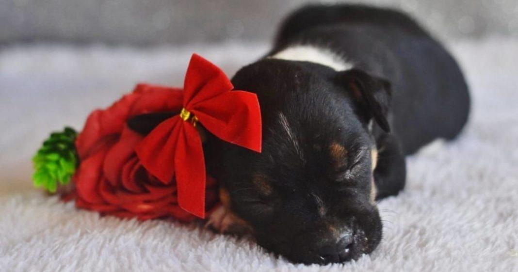 foto 'newborn' feita com cadelinha