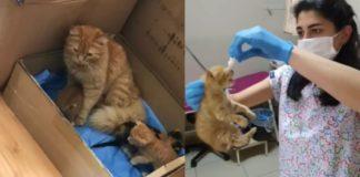 Mamãe gata leva filhote doente até hospital e pede ajuda para médicos na Turquia