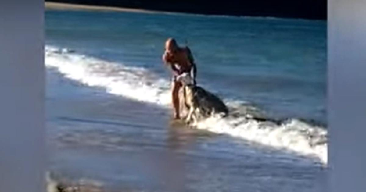 Homem salva ovelha se afogava mar Austrália