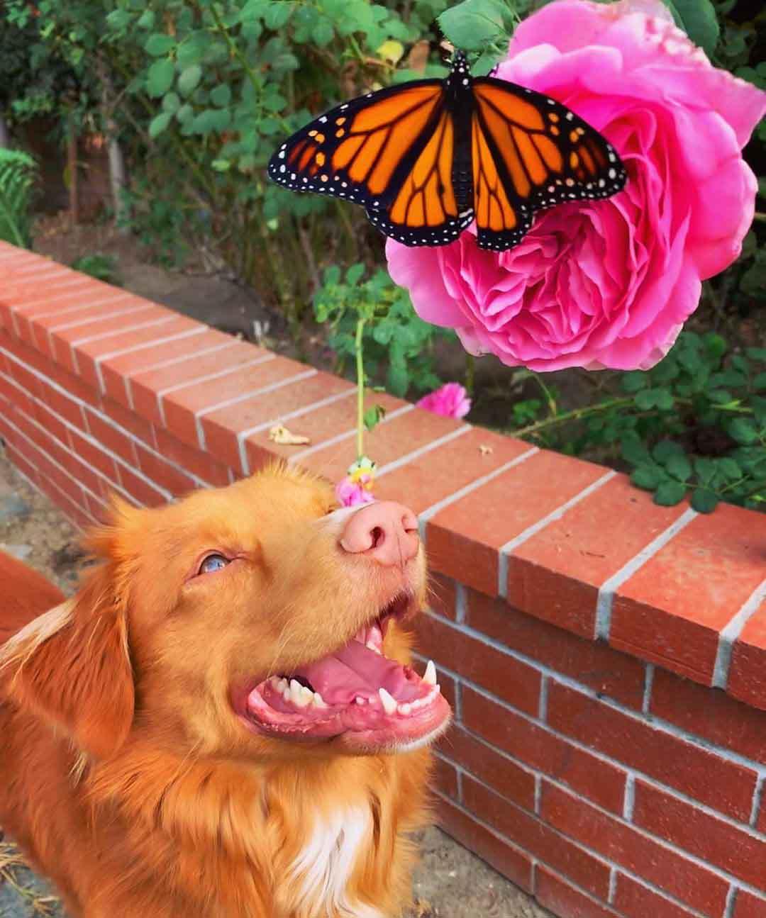 cachorro observa borboleta flor