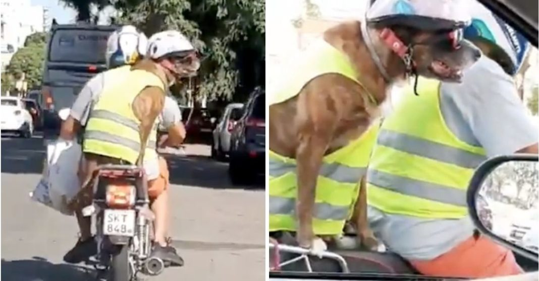 cachorro de moto capa