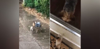 Cachorro tirando gato chuva