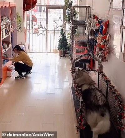 mulher arruma itens prateleira e cachorros em esteira
