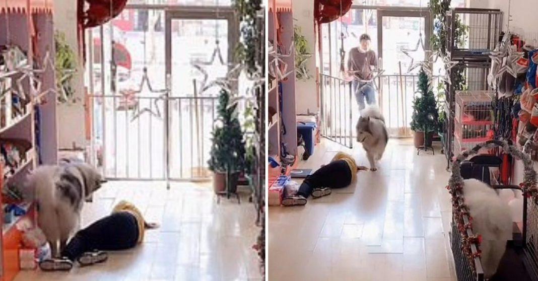 cachorro salvando mulher desmaiou