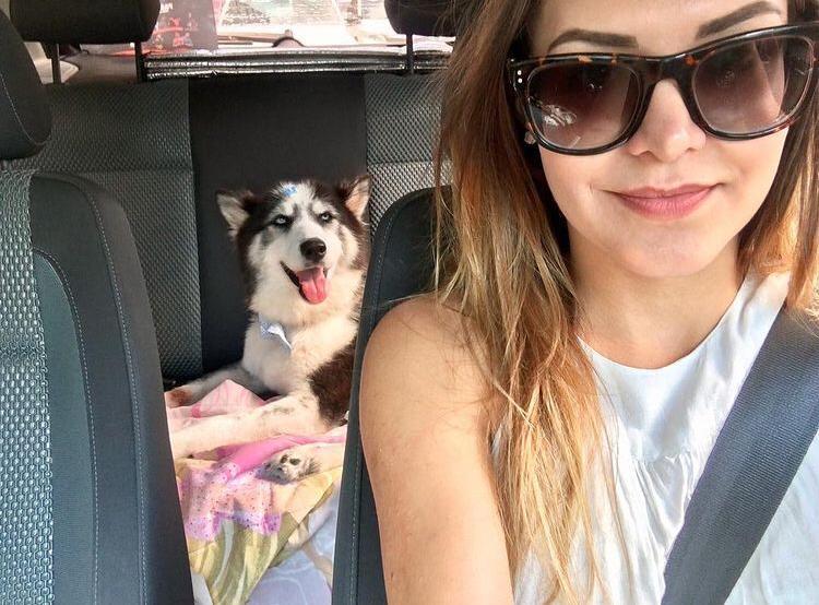 mulher dirigindo carro cadela banco atrás