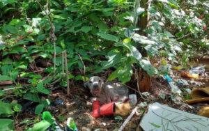 Cão abandonado em matagal