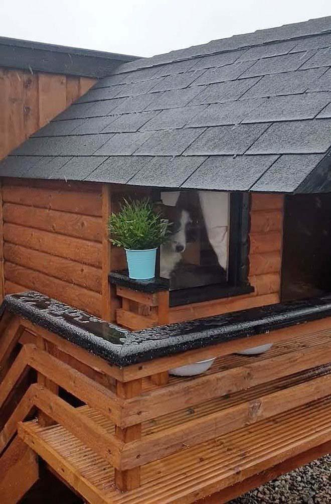cadela janela chalé abrigando chuva