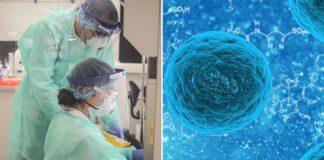cientistas analisam amostra microscópio