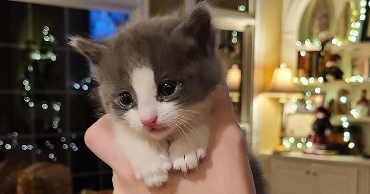 filhote gato segurado mão pessoa