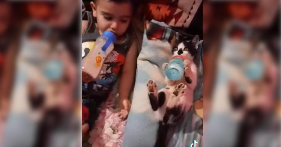 gatinho toma leite mamadeira deitado cama