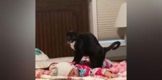 gato em cima bebê