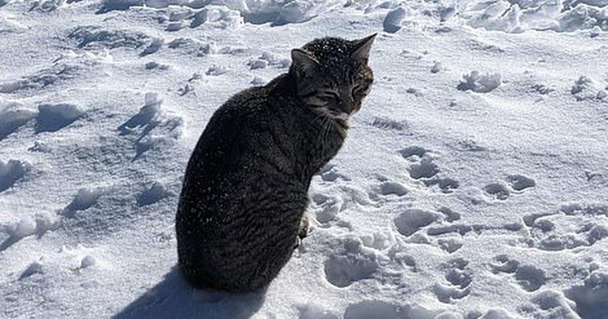gato perdido em montanha nevada