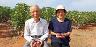 casal de japoneses idosos com figos