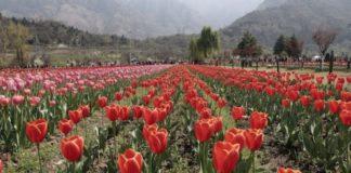 jardim de Srinagar
