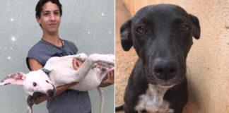 Eduardo Caiado montou sozinho o primeiro abrigo para animais de Anápolis (GO). Foto: reprodução/VOAA