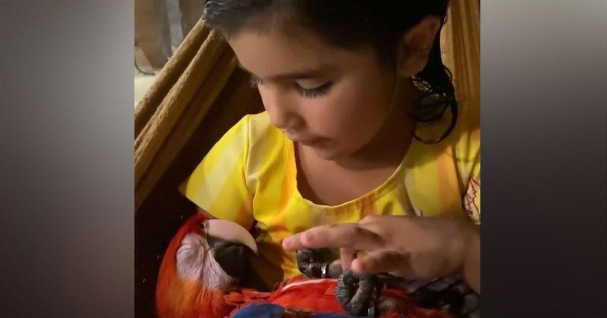 Menina fazendo carinho em arara