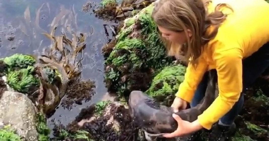 Menina resgata tubarão encalhado