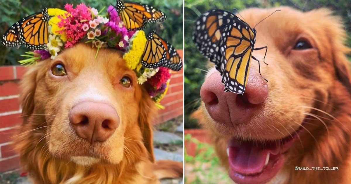 borboleta pousa focinho cachorro