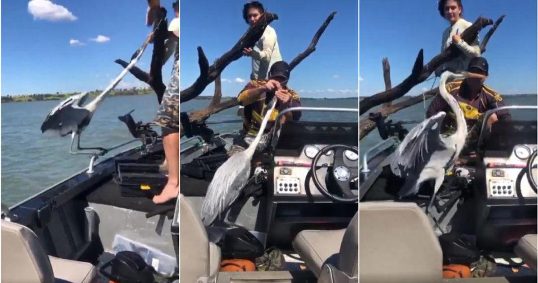 Garça sendo resgatada em rio