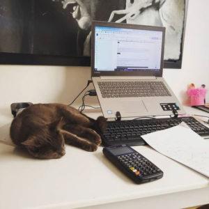 Gata deitada em mesa ao lado de computador