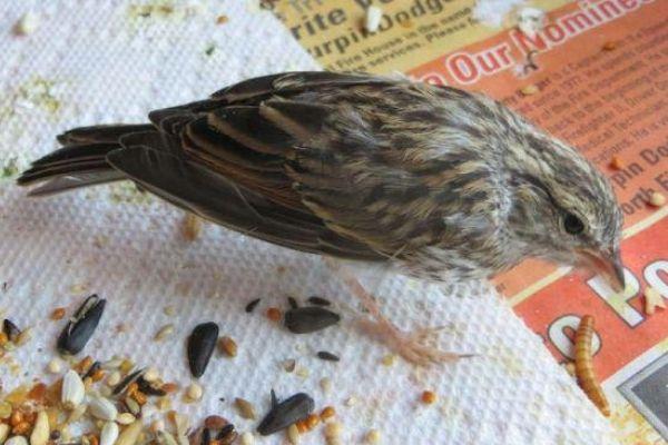 passarinho resgatado recebe cuidados