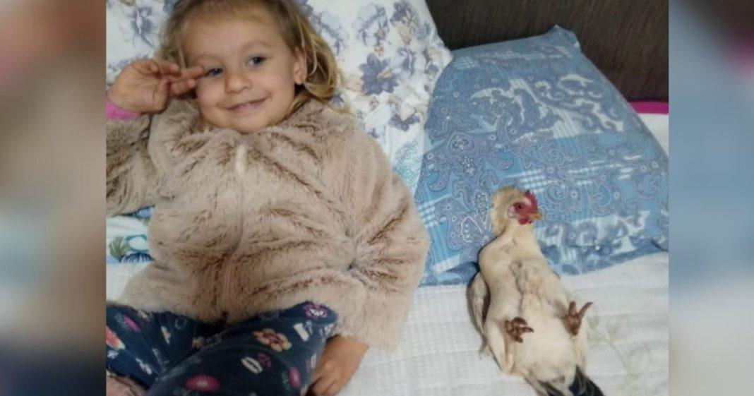 menina e galinha de estimação