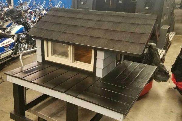 policiais constroem casa para gatinha de rua