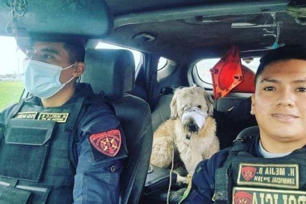 policiais levam cãozinho em seu carro