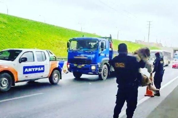 policiais param trânsito e tiram cãozinho de perigo