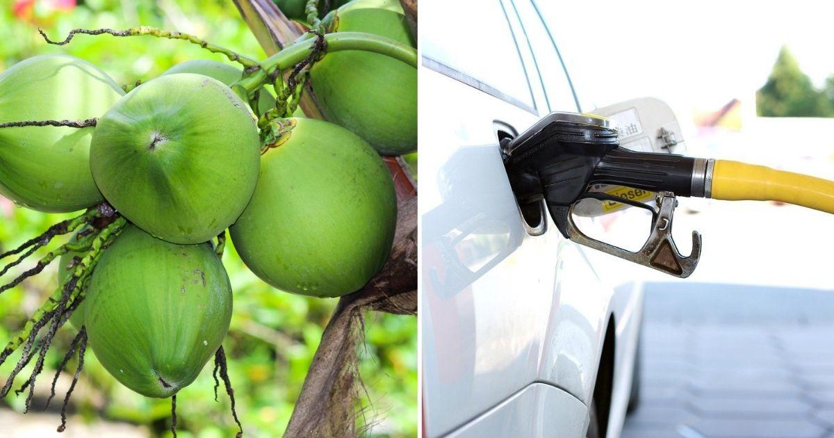 transformar coco verde em etanol