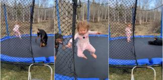 Bebê e cachorro pulando em cama elástica