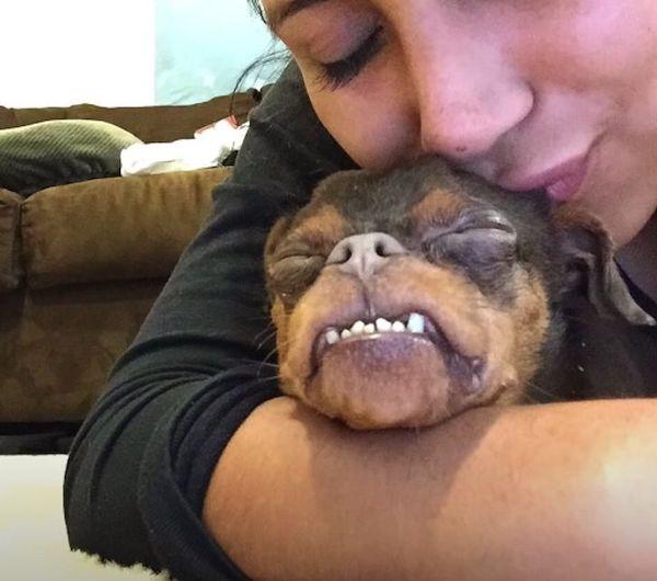 cachorro com deformidades