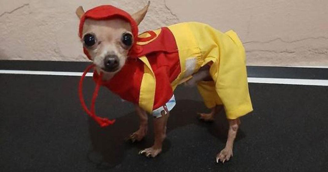 Cachorro fantasiado de Chapolin