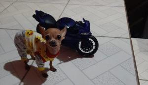 Cachorro ao lado de moto de brinquedo