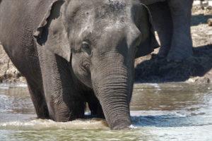 Elefanta brincando em lago