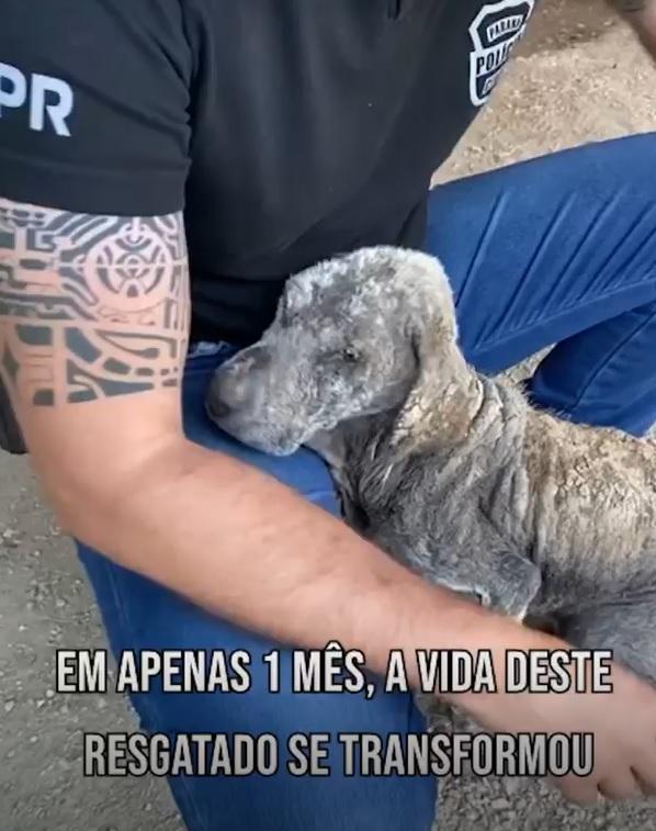 cachorrinho abraça delegado que o resgatou