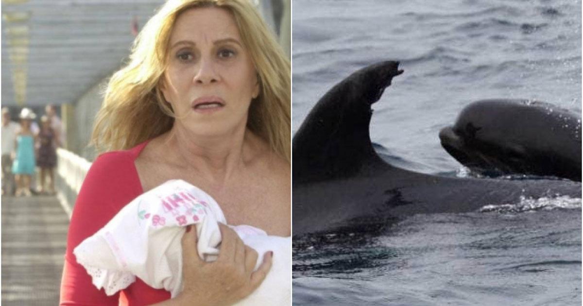 Nazaré ao lado de golfinho que adotou baleia