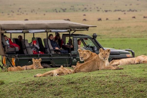 safari quênia