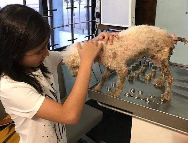 menina cofrinho cachorro resgatado 1