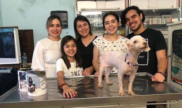 menina cofrinho cachorro resgatado 3