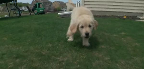 menino protese e cachorra sem pata 2