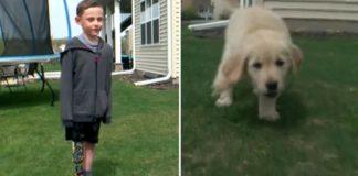 menino protese e cachorra sem pata capa